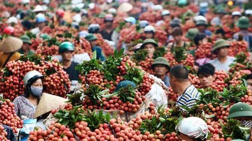 Kiến nghị cho chuyên gia Nhật Bản sang Việt Nam kiểm định vải thiều không phải cách ly