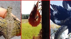 Loạt ảnh thiên nhiên kỳ quái cho thấy sự đa dạng của tạo hóa, khoa học cũng khó lý giải