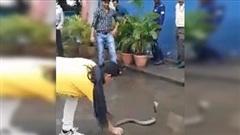 Cô gái trẻ dùng tay không bắt rắn hổ mang chúa 'khủng'
