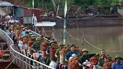 Vải thiều Bắc Giang vào vụ, dân gồng mình chở hàng tạ vải chòng chành qua chiếc cầu phao 'tử thần': 'Ngã lộn xuống sông là chuyện bình thường'