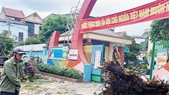 Chặt cây cổ thụ tươi tốt, trường học ở Nghệ An bị kiểm điểm