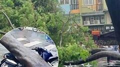 Cây xanh bật gốc đè bẹp xe máy trong cơn mưa lớn ở Sài Gòn, may mắn không có ai bị thương