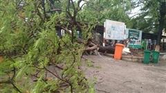 Cây phượng lớn bật gốc trong sân trường, 3 nữ sinh bị nhánh cây va vào