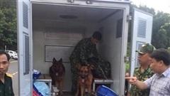 Huy động chó nghiệp vụ, truy bắt kẻ vượt tù trốn trên đèo Hải Vân