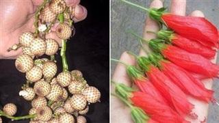 5 món ăn vặt 'huyền thoại', toàn hoa với quả dại mà nếu biết hết chúng, bạn nhất định đã có 1 tuổi thơ vô cùng dữ dội