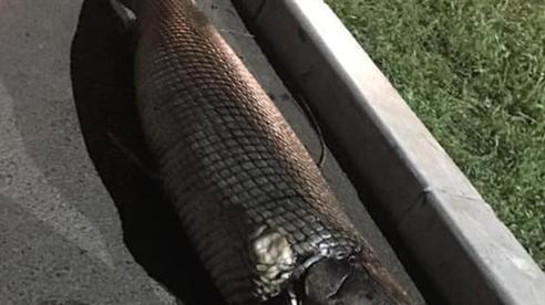Bất ngờ phát hiện 'xác cá sấu' trong Công viên Thống Nhất