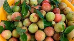 Giá mận Nhật lên tới 213k/kg nhưng người Việt ở Nhật vẫn 'cắn răng' mua ăn cho đỡ nhớ món quả đặc sản quê nhà