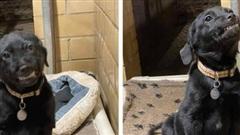 Video: Tan chảy trước chú chó nhe răng cười toe toét mỗi lần có người đến nhận nuôi