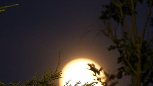 Hình ảnh tuyệt đẹp về trăng dâu tây tháng 6