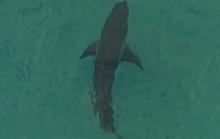 Đụng cá mập trắng khổng lồ, người đàn ông 60 tuổi chết thảm