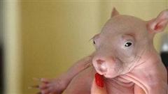 Chùm ảnh khoảnh khắc mới chào đời của các bé động vật, nhỏ xíu đỏ hỏn khiến nhiều người phải thốt lên: 'Thật bất ngờ!'