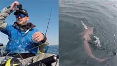 Khoảnh khắc kinh hoàng cá mập tranh cướp cá của ngư dân