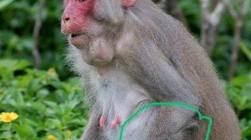 Phát hiện 1.370 bẫy thú ở Khu bảo tồn thiên nhiên Sơn Trà