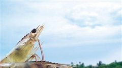 Bayer tăng cường giải pháp giúp phát triển ngành nuôi trồng thủy sản nước ấm