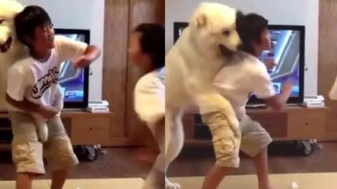 Hai anh em háu chiến đánh nhau, chú chó cuống quýt can ngăn, nhưng dân mạng lại soi ra sự thiên vị trắng trợn của 'bảo mẫu' 4 chân này!