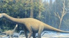 Top 5 điều thú vị mà có thể bạn chưa biết về khủng long Sauropod