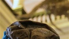 Phát hiện hóa thạch quả trứng thằn lằn lớn nhất trong thời đại khủng long