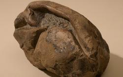Phát hiện quả trứng lớn nhất thế giới, nghi là của 'quái vật biển' khổng lồ sống tại Nam Cực cách đây 66 triệu năm