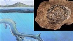 Phát hiện hóa thạch trứng 68 triệu năm tuổi, nghi của loài Thương long khổng lồ