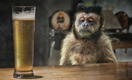Một con khỉ nghiện rượu bị kết án tù chung thân vì gây hậu quả 'đặc biệt nghiêm trọng'