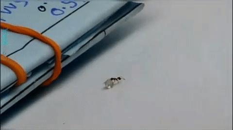 Bắt quả tang kiến ăn trộm kim cương trong tiệm đá quý