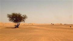 Cát bụi Sahara 'tấn công' vùng biển Caribe