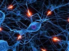 SARS-CoV-2 có thể gây tổn hại toàn bộ hệ thần kinh
