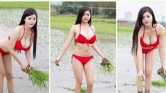 Mặc bikini đi trồng lúa, bón phân, cô nàng hot girl nhận muôn vàn chỉ trích từ phía cộng đồng mạng