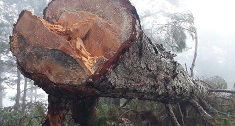 Từ phản ánh của Báo CAND, khởi tố vụ án phá rừng ở Langbiang
