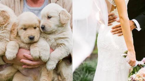 Lên ý tưởng kỳ quặc để tổ chức đám cưới, cô dâu hứng chịu làn sóng chỉ trích kịch liệt từ cộng đồng mạng