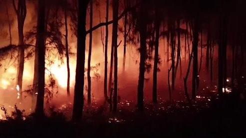 Dập tắt vụ cháy rừng thông kéo dài 2 ngày, lan qua nhiều xã ở Nghệ An