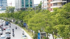 Chưa tới 5 năm, Hà Nội trồng mới hơn 1,5 triệu cây xanh: Đẹp đô thị, hạ nhiệt ngày nắng nóng