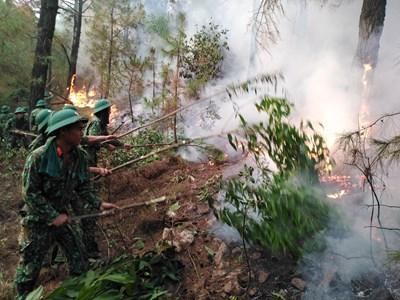 Nỗ lực cứu rừng ở Nghệ An