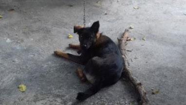 Bản tin cảnh sát: Bi hài vụ án tranh chấp chó ở Tiền Giang; Không ngờ người mẹ trẻ vứt bỏ con mới sinh là đối tượng truy nã