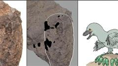 1.300 quả trứng sinh vật lạ 110 triệu tuổi xuất hiện ở Nhật Bản