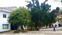 Quảng Bình: Điều tra nhóm người đầu trọc xông vào bệnh viện hành hung bệnh nhân