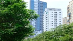 Hà Nội phát triển hệ thống cây xanh: Làm dày thêm 'tấm lá chắn' bảo vệ môi trường