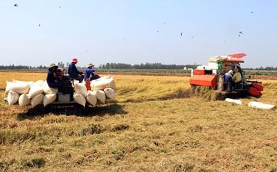 Nắm bắt thời cơ nâng vị thế gạo Việt