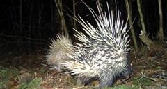 Phát hiện nhiều động vật quý hiếm tại Vườn Quốc gia Bidoup - Núi Bà