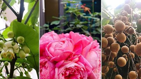 Khu vườn mang tên hạnh phúc của bà mẹ trẻ Hà Nội