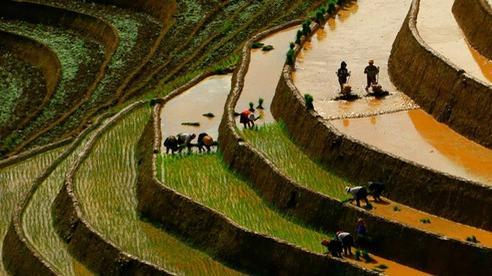 Ngắm ruộng bậc thang Mù Cang Chải đẹp lung linh mùa đổ nước