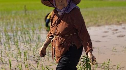 VIDEO: Cụ già gần 90 vẫn đi cấy, đan lưới phăng phăng giữa ngày hè 40 độ khiến giới trẻ