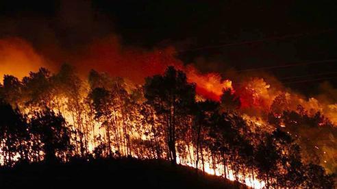 Quảng Ngãi: 1 tháng xảy ra 4 vụ cháy rừng