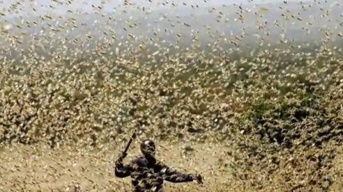 Dùng biện pháp 'tàn độc' nhất để đại chiến cả nghìn tỉ con châu chấu, chuyên gia cảnh báo hậu quả khôn lường
