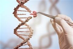 Chỉnh sửa gen có thể gây ra tác dụng ngoài ý muốn
