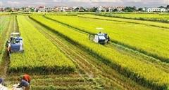 Cấp 617.964 giấy chứng nhận quyền sử dụng đất nông nghiệp