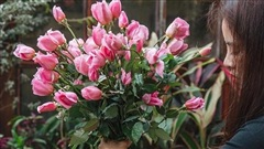 'Làm thế nào để hoa trong bình tươi lâu hơn?' - thiền sư giải thích đáp án, mang đến lợi ích trọn đời cho tất cả mọi người