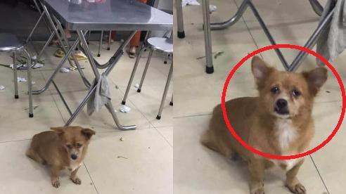 Chú chó 'trở mặt nhanh hơn lật bánh tráng': Phút trước còn làm bộ đáng thương xin ăn, ăn xong liền xù lông sủa nhất quyết không cho lại gần