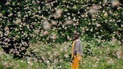 Chùm ảnh rợn người về đại dịch châu chấu đang hoành hành ở châu Phi: 'Binh đoàn' nghìn tỷ con châu chấu với sức ăn bằng 35.000 người/ngày bay kín trời