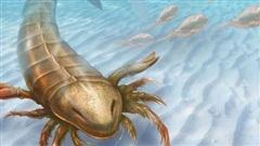 Phát hiện 'vua bọ cạp' to hơn con người, móng vuốt khủng long